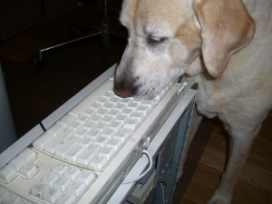 dogs should be away from computers